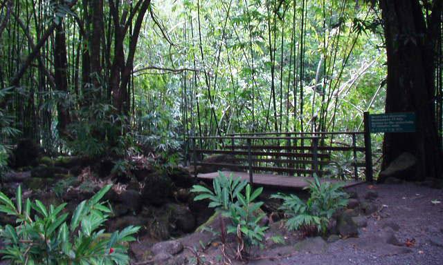 Tahiti Natural Treasures