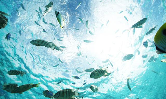 Tahiti Snorkel Experience