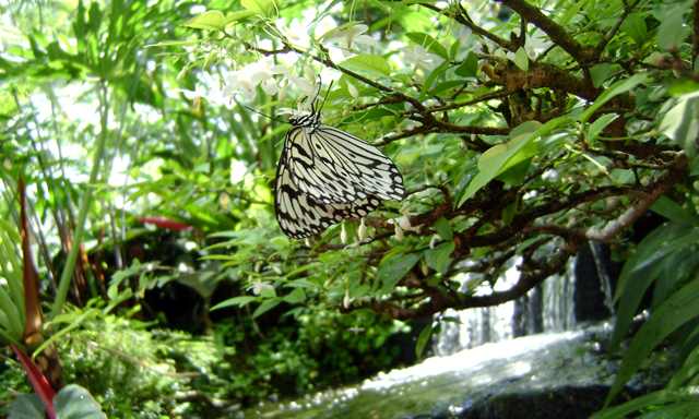 Penang Gardens Tour
