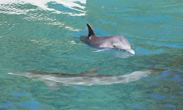 Anguilla Dolphin Encounter & Beach