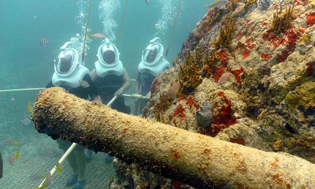 Sea Trek St Maarten