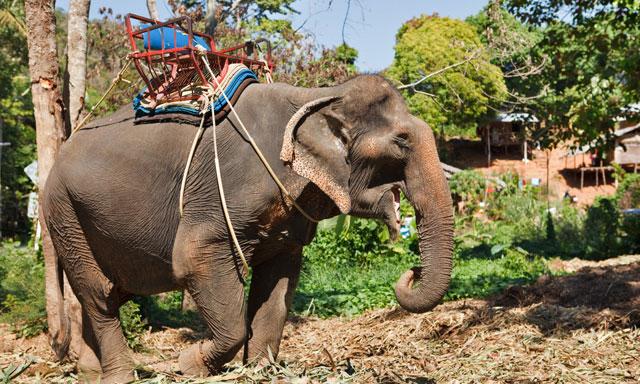 Elephant Adventure