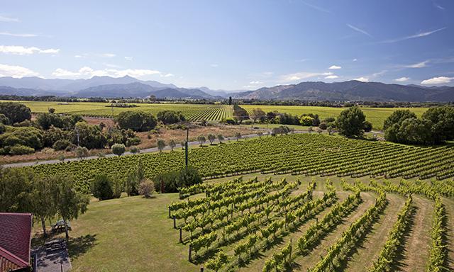 Explore Marlborough Wineries by Bike
