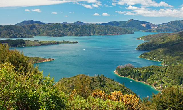 Marlborough Sounds Kayaking Adventure
