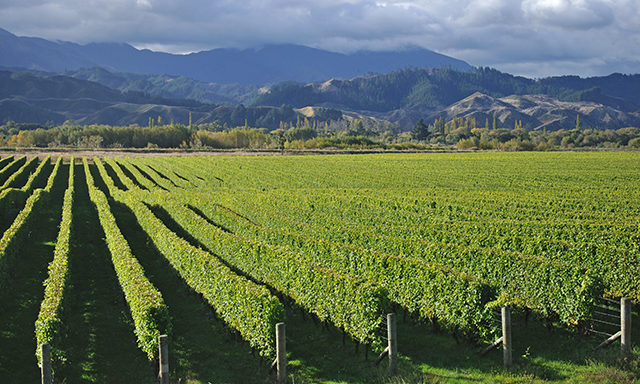 Marlborough Vineyard Tour
