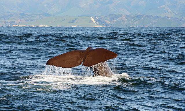 Marlborough Whaling Station Cruise