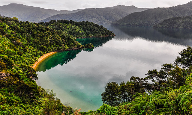 Panoramic Blenheim and Scenic Queen Charlotte Sound Cruise
