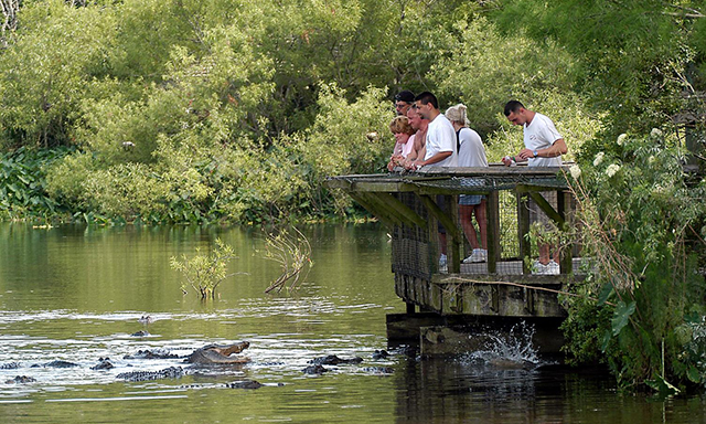Gatorland - The Alligator Capital of the World