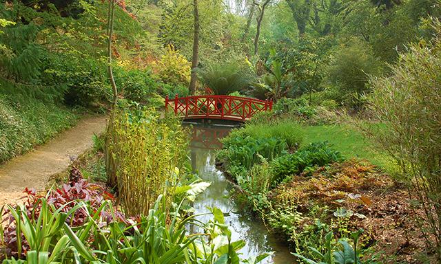 Abbotsbury Swannery & Gardens
