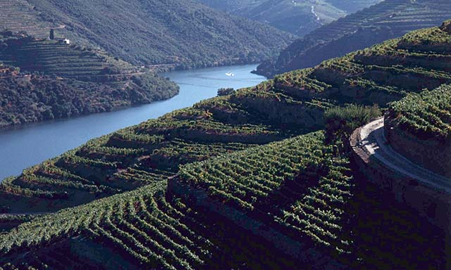 The Douro Valley Winery Tour