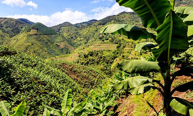 Banana Plantation & Coastal Highlights