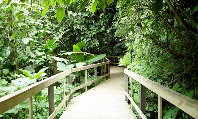 Rainforest Extravaganza