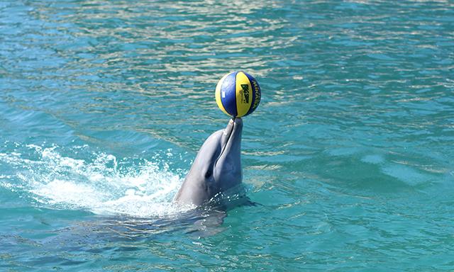 Dolphin Swim & Ocean World Adventure