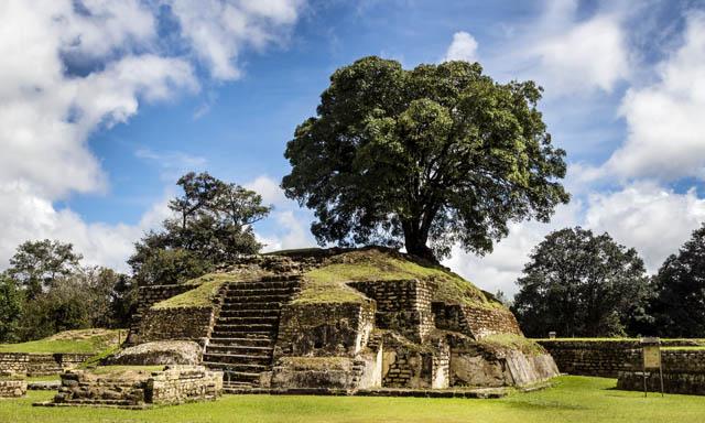 The Mayan Phenomenon