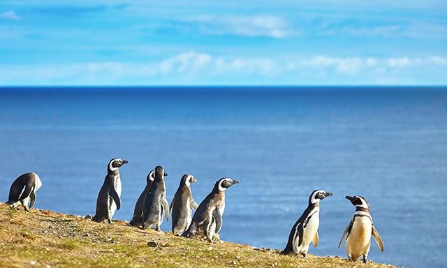 Magdalena Island Natural Penguin Reserve