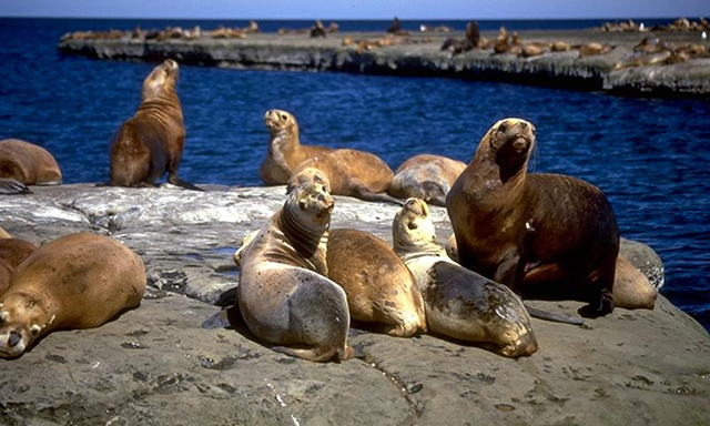 Sea Wolves Island