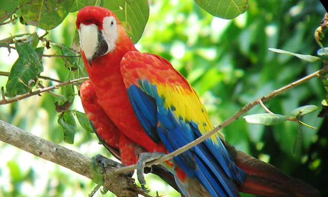Scarlet Macaw Sanctuary and Country Drive