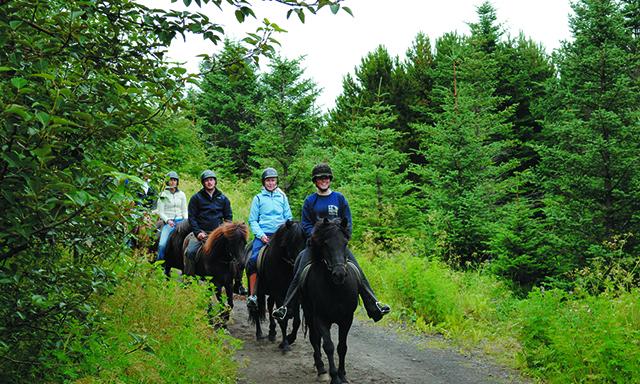 Iceland's Landscapes by Horseback