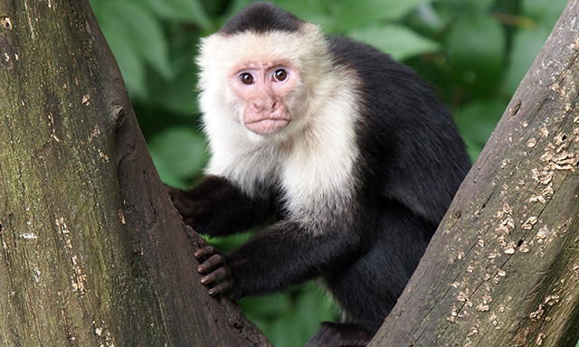 Accessible Roatan Monkey Sanctuary & Marine Park