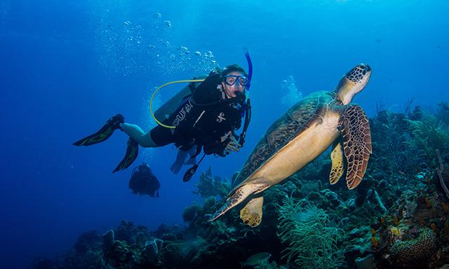 Discover Scuba Shore Dive