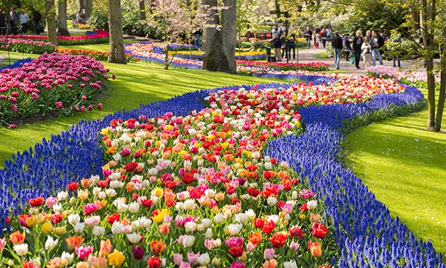 Keukenhof, Festival of Tulips