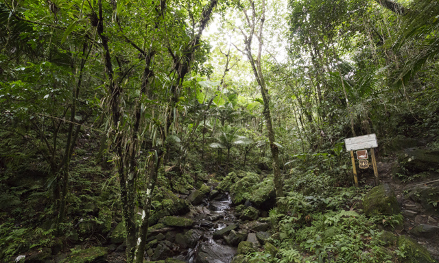 El Yunque Rain Forest Hike with Airport Drop-Off