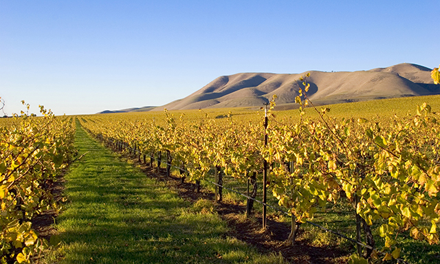 Santa Ynez Valley Wine Tour
