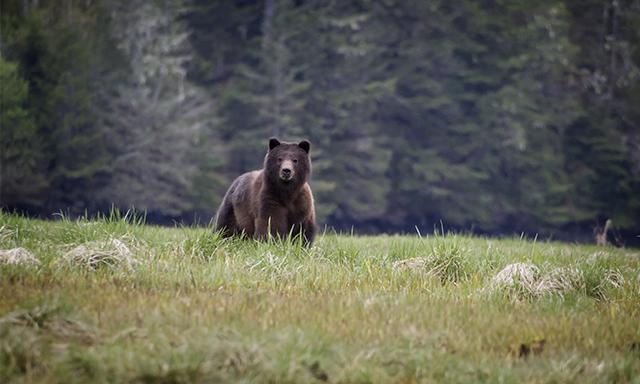 Alaska Bear and Silver Bay Homestead Experience