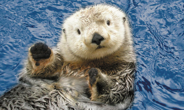 Sea Otter & Wildlife Quest
