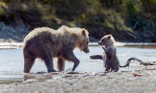 Sea Otters, Raptors and Bears Oh My