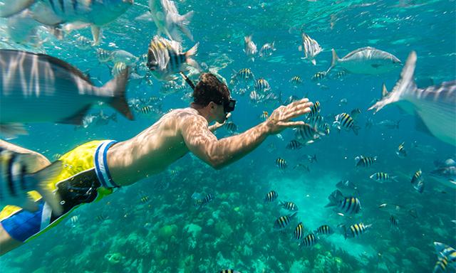 Castaway Snorkel and Swim Cruise