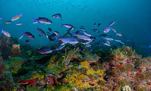 Glass Bottom Boat - Underwater Highlights