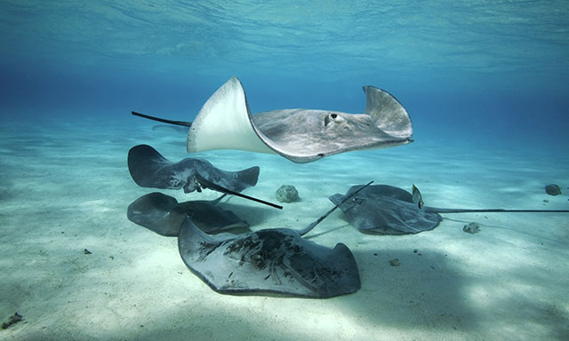Stingray and Kayak Adventure