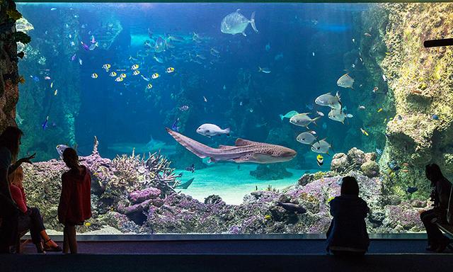 Sydney Sealife Aquarium