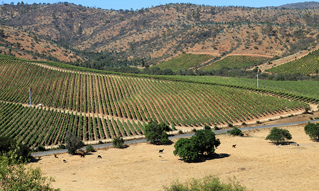 Chilean Wines and Traditions (Ends at Airport)