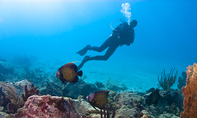 Certified Scuba Dive - The Twin Bommies