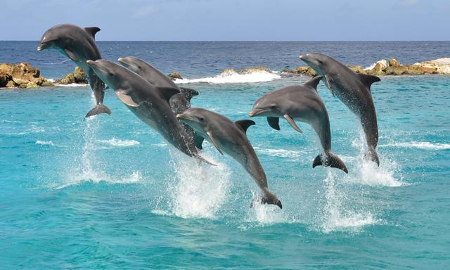 Dolphin Encounter, Seaquarium And Animal Shows